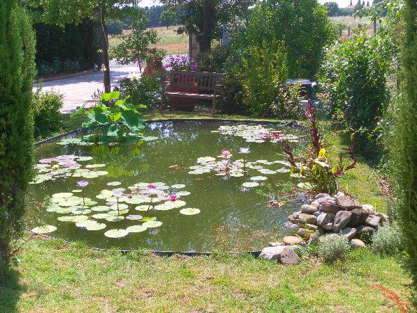 Ninfeebarbagli produzione e vendita piante acquatiche da for Laghetti ornamentali