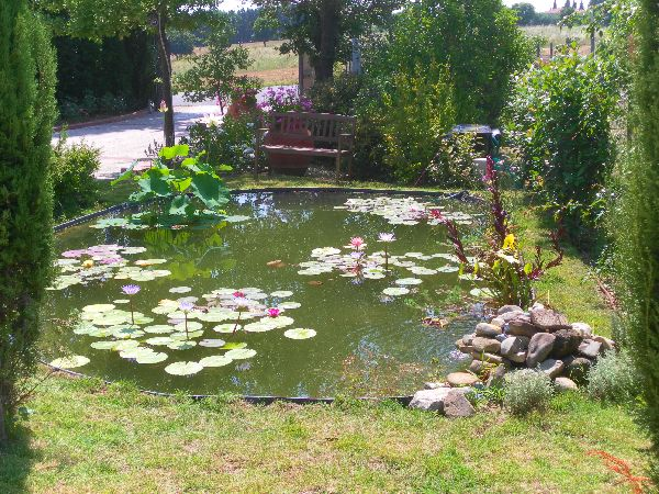 Piante da giardino vendita on line idea creativa della for Vendita piante da giardino