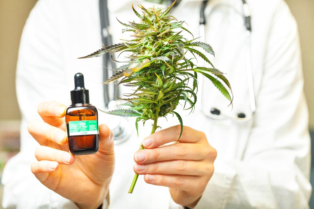 Il mercato italiano della cannabis light